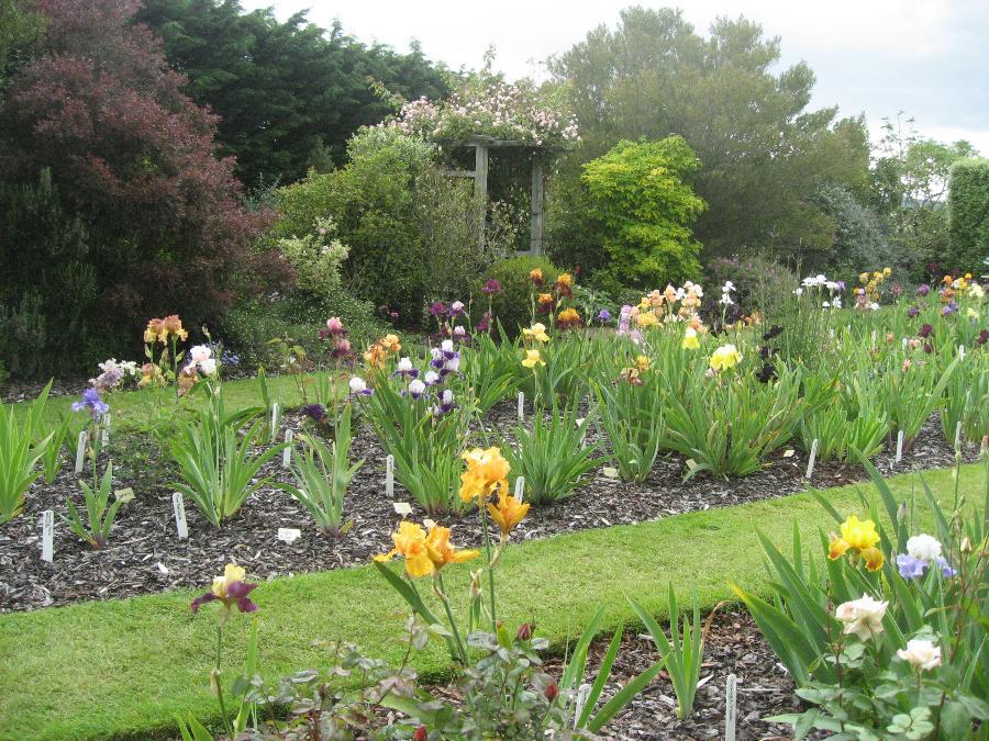 Large Of Iris Bulbs